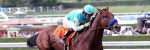 american pharoah race horse